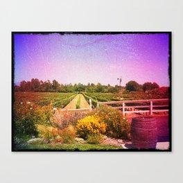 Santa Barbara Vineyard Farm Canvas Print