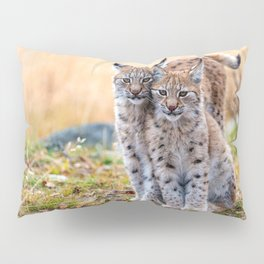 Wonderfully Beautiful Two Curious Cute Lynx On Grassland Close Up Ultra HD Pillow Sham