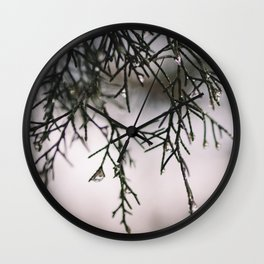 Sparkling Raindrops Dripping off Pine Wall Clock