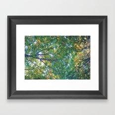 forest 013 Framed Art Print