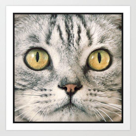 Cat's eyes....! Art Print