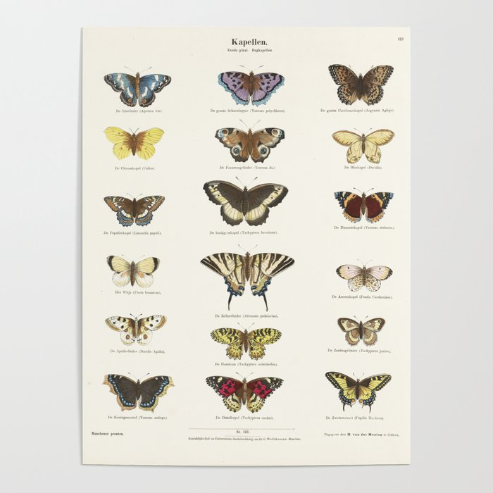 Vintage Butterfly Chart Poster by fineearthprints | Society6  Vintage Butterfly Chart