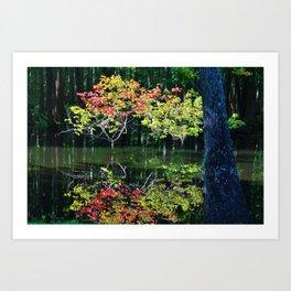 Autumn In The Swamp Art Print