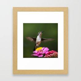 Hummingbird VI Framed Art Print
