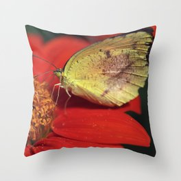 Sleepy Orange on Mexican Sunflower Throw Pillow