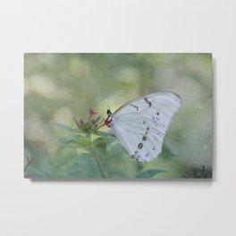 White Morpho Butterfly Metal Print