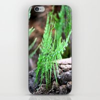 fern iPhone & iPod Skins featuring fern by  Agostino Lo Coco