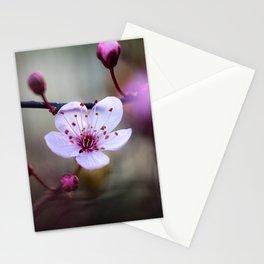 Cherry Tree Blossom. Stationery Cards
