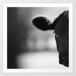 Cattle Portrait Art Print