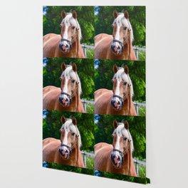 Equine Beauty Wallpaper