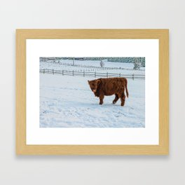 Are you looking at me, Scotish Highland Cow Framed Art Print