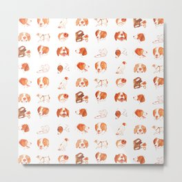 Faces and Poses of a Brittany Spaniel Metal Print