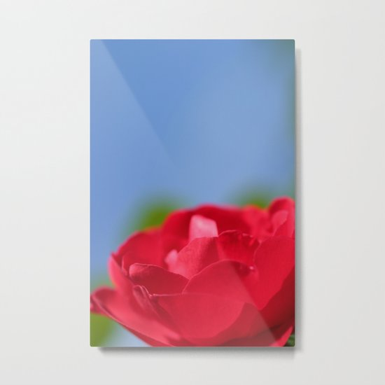 Red Rose Blue Sky Metal Print