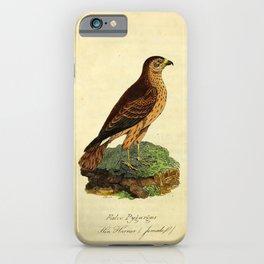 Hen Harrier, falco pygargus25 iPhone Case
