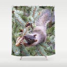 Watercolor Pine Squirrel 08, I.... Gotcha! Shower Curtain