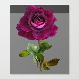 Decorative Purple Velvet  Rose Charcoal Grey Designs Canvas Print