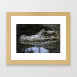 Spectacled Caiman Framed Art Print