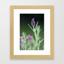 Lavendel Framed Art Print