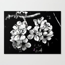 Spring Time Blossoms In Black And White Canvas Print