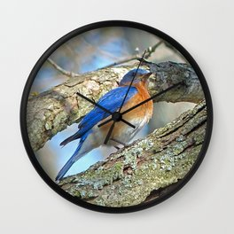 Bluebird in Tree Wall Clock