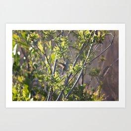 Hummingbird in the Bushes Art Print