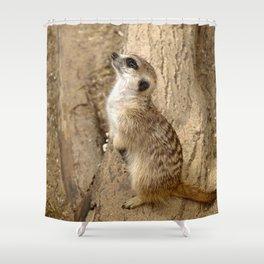 Meerkat 0115 Shower Curtain