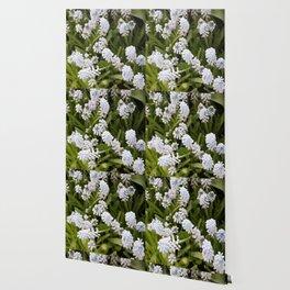 Longwood Gardens Orchid Extravaganza 27 Wallpaper