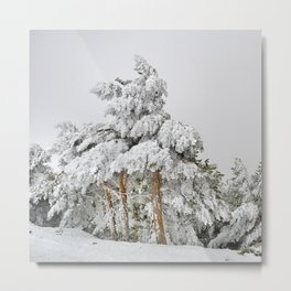 """""""Ghost forest"""". Square.  After the snowstorm Metal Print"""