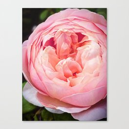 Wide Mouth Rose Canvas Print