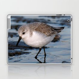 A Strolling Sanderling Laptop & iPad Skin