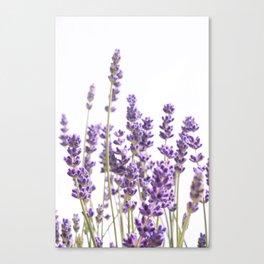 Purple Lavender #1 #decor #art #society6 Canvas Print