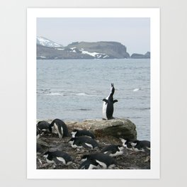 Chinstrap Penguins, Antarctica 2006 Art Print