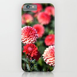 DEEP PINK POM POM DAHLIAS - IN THE LATE SUMMER SUNSHINE iPhone Case