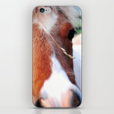 li'l sebastian iPhone & iPod Skin