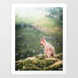 Greenland Goat on mossy hills Art Print