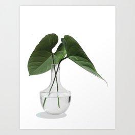 Caladium Cuttings in a Vase Art Print
