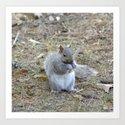 Gray Squirrel Munching on Pine Cones by debracortesedesigns