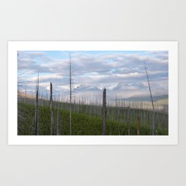 Reclaiming the Forest Art Print