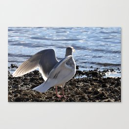 Lighting up the wingtips Canvas Print