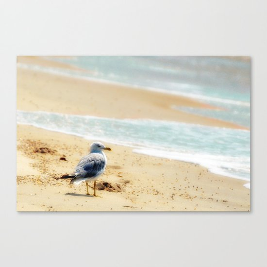 Lonely gull of summer. Canvas Print