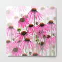 pink coneflower field by colorandcolor
