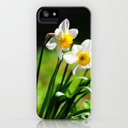 Beautiful Daffodils in Spring Bloom iPhone Case
