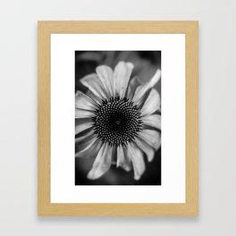 B&W Framed Art Print