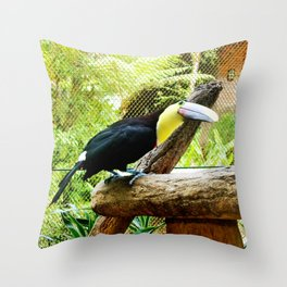 Curious Toucan Throw Pillow