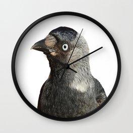 Jackdaw (Corvus monedula) Bird Portrait Vector Wall Clock