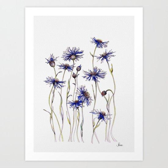 Blue Cornflowers, Illustration by jrosedesign
