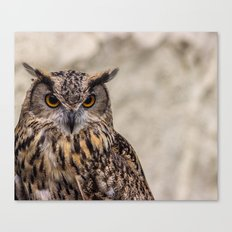 The Look of an Owl Canvas Print