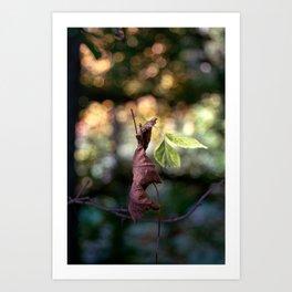 Nature fazination Art Print