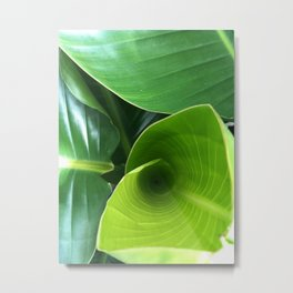 all green leaves Metal Print