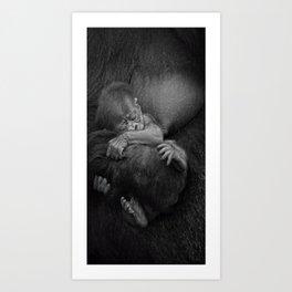 Newborn Baby Gorilla Art Print